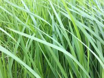 Grönt gräs växer lite varstans bakgrund arkivbild