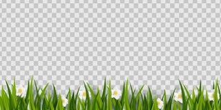 Grönt gräs, vårblommor gränsar på genomskinlig bakgrund Beståndsdel för garnering för påskhälsningkort med Royaltyfria Bilder