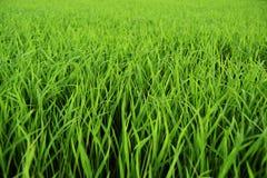 Grönt gräs, vårtid arkivbild