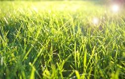 Grönt gräsfält Royaltyfri Fotografi