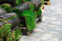 Grönt gräsmattagräs i rullar royaltyfria foton