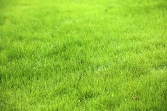 Grönt gräsmattakopieringsutrymme Arkivbilder