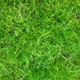 Grönt grönt gräs Arkivfoto