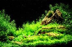 Grönt härligt planterat tropiskt sötvattens- akvarium royaltyfri bild