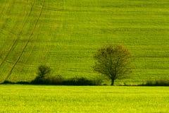 Grönt höstfält Royaltyfri Fotografi