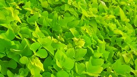 grönt hav Royaltyfri Bild