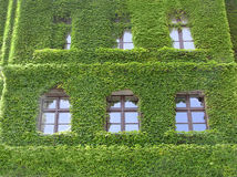 grönt hus Arkivfoton