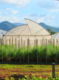 Grönt hus för arganic grönsakväxt i rent jordbruk ind Fotografering för Bildbyråer