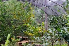 Grönt hus för orange odlinginsida Arkivbilder