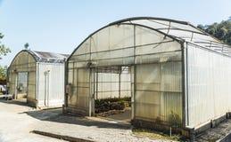 Grönt hus på växtfält Royaltyfria Foton