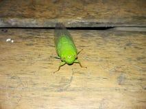 grönt kryp Royaltyfria Bilder