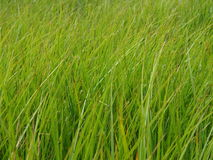 grönt långt för gräs arkivbild