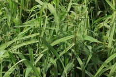 grönt långt för gräs arkivbilder