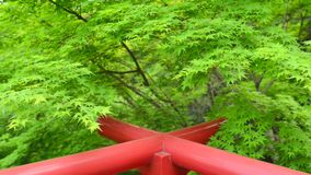 Grönt lönnträd över röd vagga på blåsig dag lager videofilmer