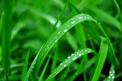 Grönt lövrikt, blöter naturbegrepp Fotografering för Bildbyråer