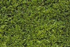 grönt lövrikt för bakgrund Arkivfoton