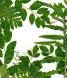 grönt lövrikt för kant Arkivbilder