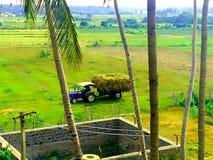 grönt land royaltyfri foto