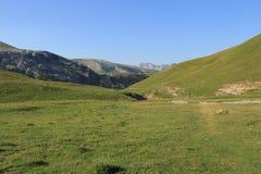 Grönt land Arkivbilder