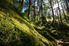 grönt land Arkivfoton