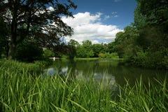 grönt landskap Royaltyfri Foto