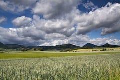 Grönt landskap av den stora lantgården royaltyfri foto