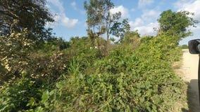 Grönt landskap av Kenya lager videofilmer