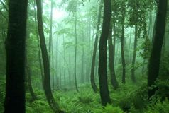 grönt landskap för skog Royaltyfri Foto
