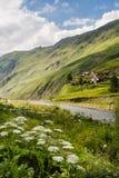 Grönt landskap för sommar för Kaukasus berg Arkivfoton