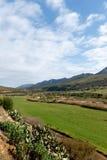Grönt landskap - Kareedouw Arkivbild