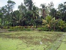 Grönt landskap med palmträd, tropiska träd och blommor och risfält i förgrund i Bali, Indonesien arkivbilder