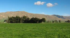 Grönt lantgårdland Royaltyfri Fotografi