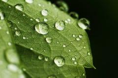 grönt leafvatten för droppar Arkivbild