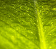 grönt leafvatten för droppar Fotografering för Bildbyråer