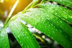grönt leafvatten för droppar Royaltyfria Bilder