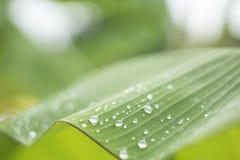 grönt leafvatten för droppe Arkivbilder