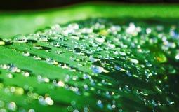 grönt leafvatten för droppe Blad för trädgårds- växt efter regn Morgondagg på leafen Arkivbild