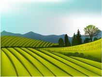 grönt liggandeberg Arkivfoto