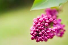 grönt lila avstånd Royaltyfria Bilder