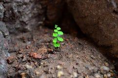 grönt little växt Arkivbilder
