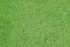 Grönt mattgräs arkivfoto