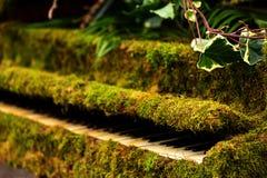 Grönt mossapiano Fotografering för Bildbyråer