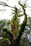 Grönt mossigt träd Arkivfoto