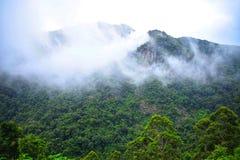 Grönt naturlandskap med blå himmel Arkivbild