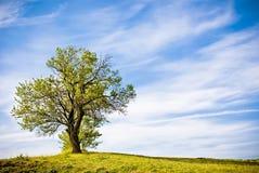 Grönt naturlandskap med ett träd Arkivbild