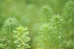 grönt naturligt arkivfoto