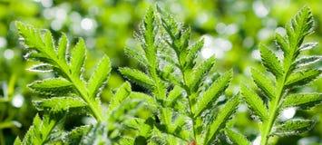 grönt naturligt för bakgrund Fotografering för Bildbyråer