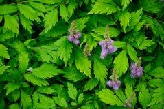 grönt naturligt för bakgrund Arkivbilder