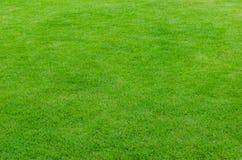 Grönt naturligt gräs fotografering för bildbyråer