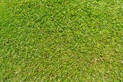 grönt naturligt utomhus- för gräs Arkivbild